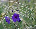 Дивногорье Травы Фото2.jpg