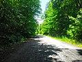 Дорога в с. Осташки, фото 1.jpg