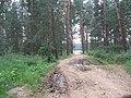 Дорога к озеру на околице - panoramio.jpg