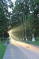 Качанівський парк. Головна алея.jpg