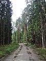 Лесная дорога le chemin de forêt meža ceļš - panoramio - Aleksandrs Timofejev… (5).jpg