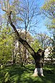 Маріїнський парк (Радянський парк) IMG 5427.jpg