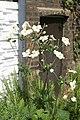 Невядомыя расліны ў музеі Джэфры 10.JPG