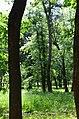 Парк Берёзовая роща в Киеве. Фото 11.jpg