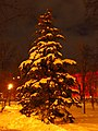Парк Шевченка. Зимова красуня.jpg