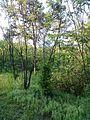 """Парк шума """"Гази Баба"""" 68.jpg"""