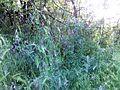 """Парк шума """"Гази Баба"""" 91.jpg"""