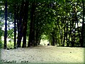Па дарозе ў летні сонечны дзень ... On the way to a sunny summer day - panoramio.jpg