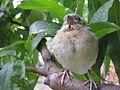 Птица на праска.JPG