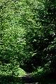 Пуща-Водиця DSC 0838.jpg