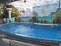 Сочинский дельфинарий парка «Ривьера». 80.jpg