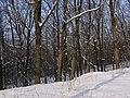 Украина, Киев - Голосеевский лес 26.jpg