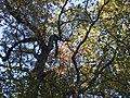 Украина, Киев - Голосеевский лес 59.jpg