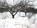 Ул. Репина. Зима. Весело - panoramio.jpg