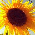 שער השמש.jpg