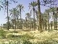 باغ چمن زراع - panoramio.jpg