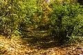 پاییزدر ایران-قاهان قم-Autumn in iran-qom 36.jpg