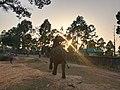 ডুলাহাজারা সাফারি পার্কের হাতি.jpg