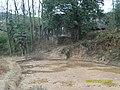 一同长大的杨梅树 - panoramio.jpg