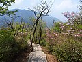 五老峰登山道 - Trail to Five Old Men Peaks - 2016.04 - panoramio.jpg