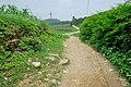 后山的风景 - panoramio - jiang-wen-jie (3).jpg