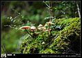 坎布拉国家森林公园 - panoramio (8).jpg