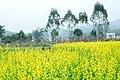 广州最美乡村—红山村 - panoramio (10).jpg