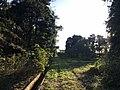 横越サギの森.jpg