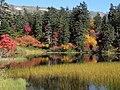 緑の沼① - panoramio.jpg
