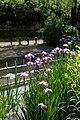 菖蒲池 - panoramio (3).jpg