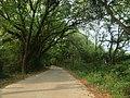 通往赣县大田乡的一条幽静小路 - panoramio.jpg