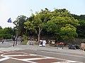 金沢城公園/いもり坂口 - panoramio.jpg
