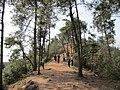 雨母山 - panoramio (4).jpg