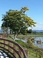 馬見丘陵公園にて Umami-kyūryō-kōen 2010.10.27 - panoramio.jpg