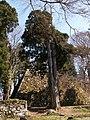 高取城跡(takatorijyou ato) 2010-3-19 - panoramio - ys1979 (2).jpg