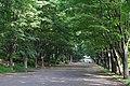 鶴間公園, Tsuruma Park - panoramio.jpg