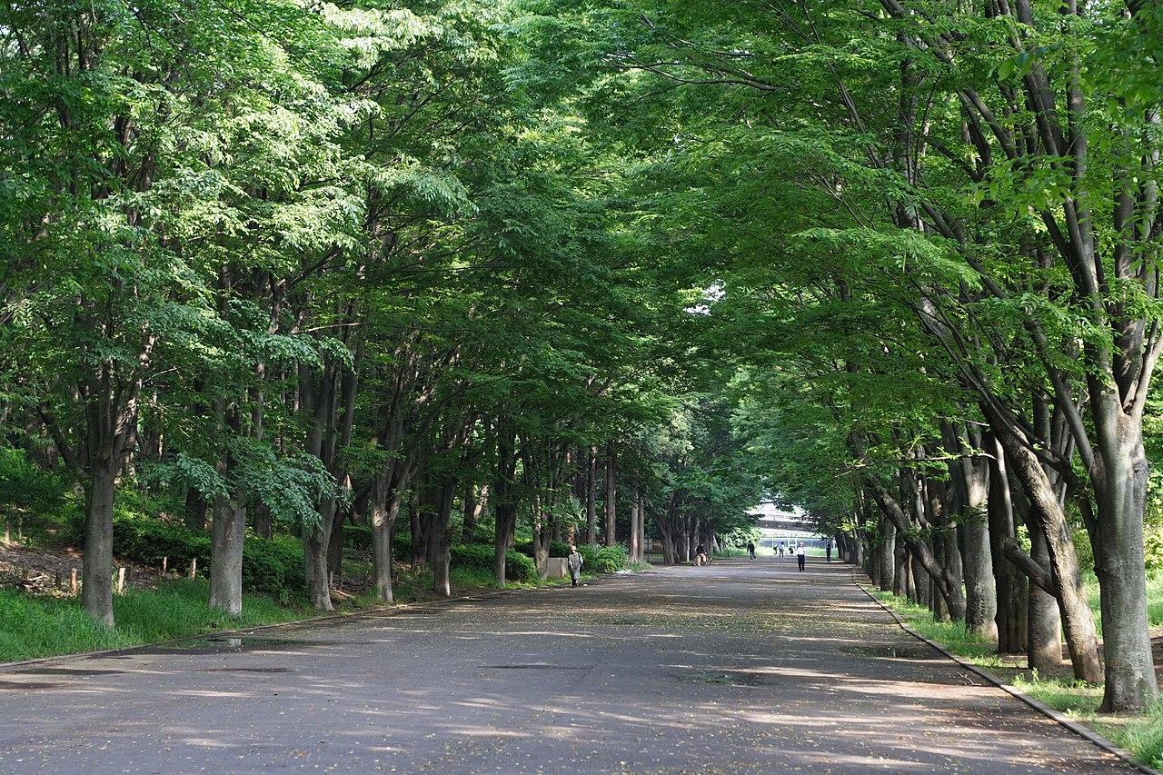 公園 鶴間