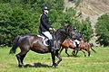 0.2014. Reiten auf den Huzulen Pferden (Rudawka Rymanowska).JPG
