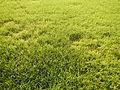 03790jfPaddy fields grasslands village Baliuag Bulacan Candaba Pampanga Bridge Roadfvf 09.JPG