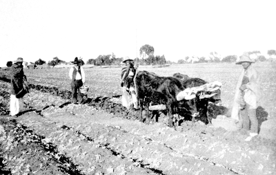 06a-Natives Ploughing With Oxen-Leon.png