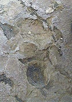 1790 footprints Kau Desert.jpg