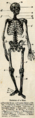 1895-Dictionary---Skeleton.png
