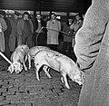 1958 Concours général de carcasses chez Géo Cliché Jean Joseph Weber-11.jpg