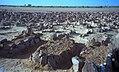 1997 279-4 Agadez Haruna's grave.jpg