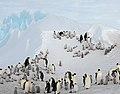 2007 Snow-Hill-Island Luyten-De-Hauwere-Emperor-Penguin-38.jpg