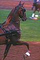 2009 Shelbyville Horse Show (3867465655).jpg