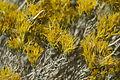 2012.10.01.121213 Shrub Antelope Island Utah.jpg