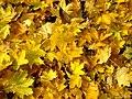 20121029040DR Dresden-Südvorstadt Beutlerpark Herbst.jpg