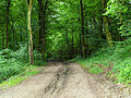 2013-06-26 21-24-51-forest.jpg