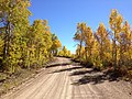 2014-10-04 13 41 44 View of Aspens during autumn leaf coloration along Charleston-Jarbidge Road (Elko County Route 748) in Copper Basin about 9.3 miles north of Charleston, Nevada.jpg